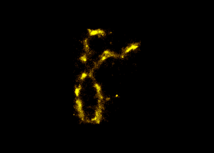 An image of a chromosome